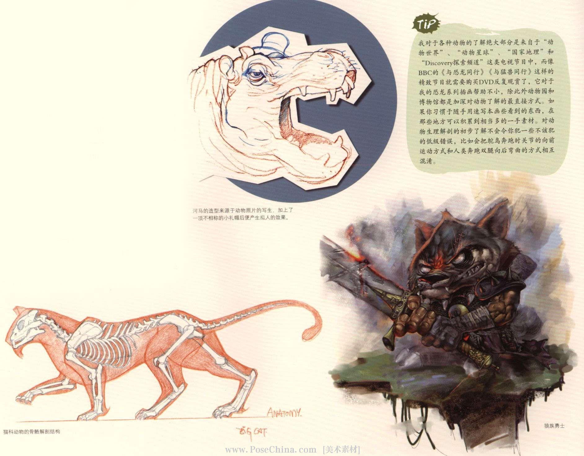 比如我们相对了解的猫科动物,不管猫与豹在体型方面有多大的差别,它们